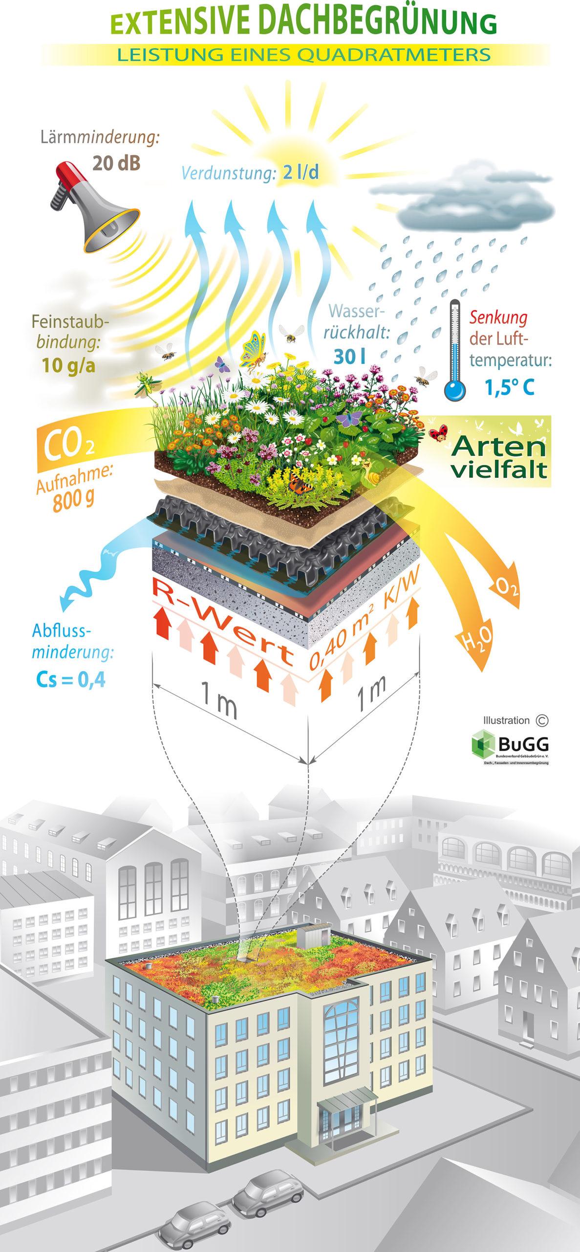 Grafik einer extensiven Dachbegrünung