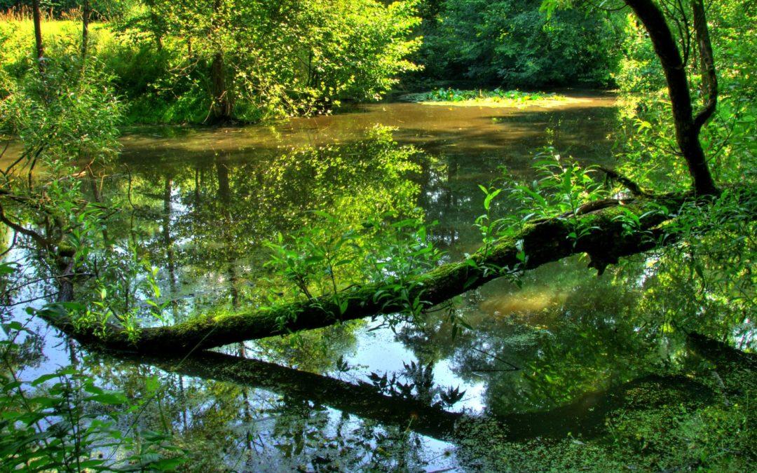 Wasser erleben mit allen Sinnen auf dem NaturGut Ophoven