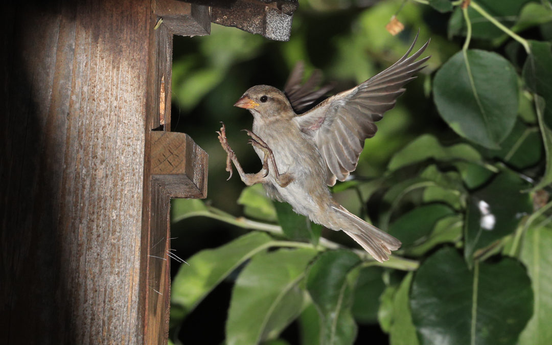 Vogelbeobachtung auf dem NaturGut Ophoven