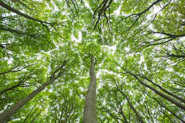 Baumbegegnungen auf dem NaturGut Ophoven